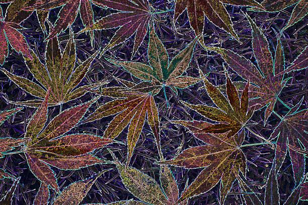 Colourful maple leaf abstract.:スマホ壁紙(壁紙.com)