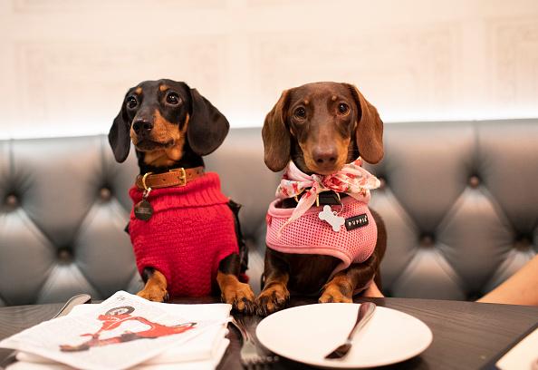 ベストショット「'A Sausage Dog Celebration' - London Dog Week 2019」:写真・画像(12)[壁紙.com]