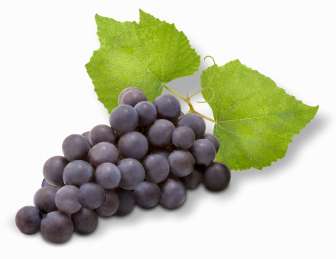 Grape「Concord Grapes on white background」:スマホ壁紙(13)