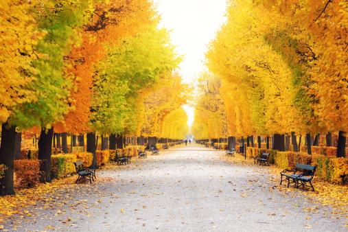 Chestnut「Autumn Park」:スマホ壁紙(15)