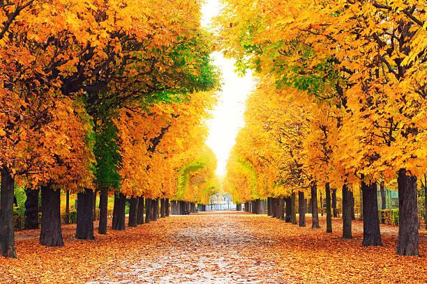 Autumn Park:スマホ壁紙(壁紙.com)