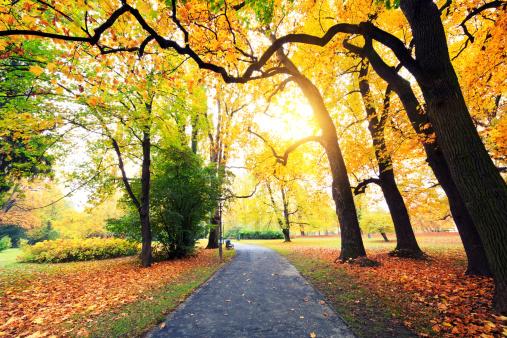 季節「秋の公園」:スマホ壁紙(18)