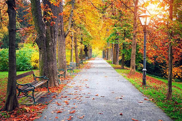 秋の公園:スマホ壁紙(壁紙.com)