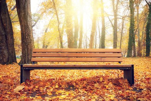 秋「秋の公園」:スマホ壁紙(18)