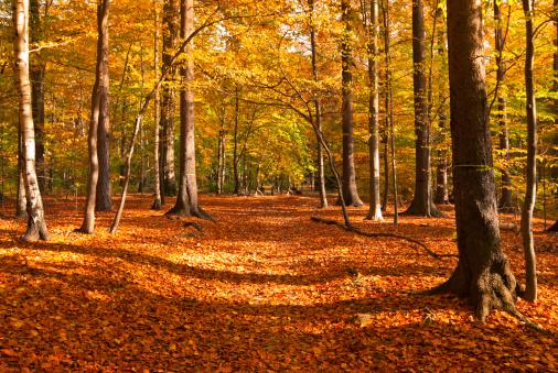 秋「秋の公園」:スマホ壁紙(19)