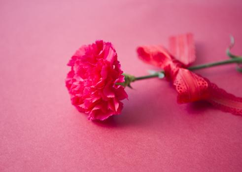 カーネーション「Red carnation」:スマホ壁紙(4)