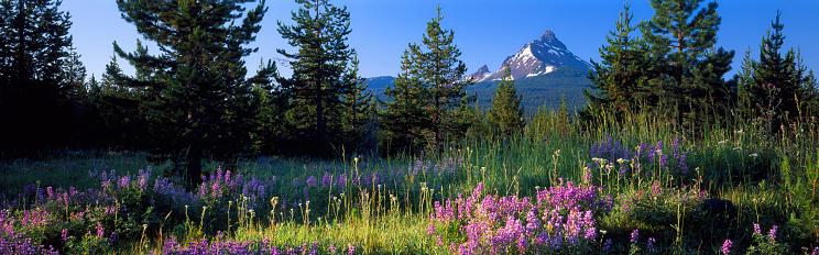 1990-1999「Mount Washington at sunrise above conifers, lupine and grasses」:スマホ壁紙(11)