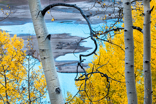 アンコンパグレ国有林「Autumn aspen trees and turquoise waters of Silver Jack Reservoir, Uncompahgre National Forest, Colorado, USA」:スマホ壁紙(7)