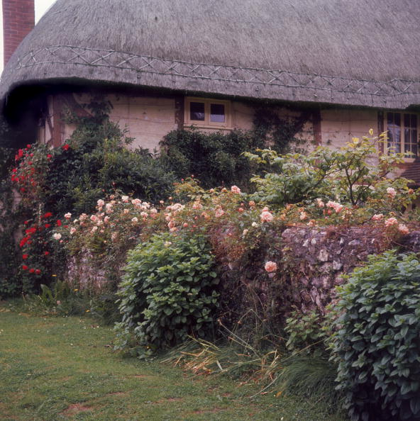 Flowerbed「Hampshire Cottage」:写真・画像(1)[壁紙.com]