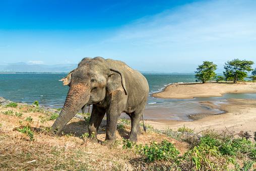 Sri Lanka「elephant on the beach. Sri Lanka (Ceylon)」:スマホ壁紙(18)
