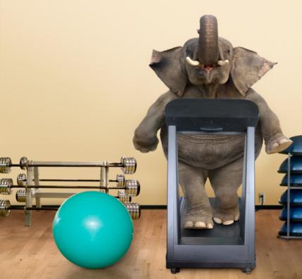 Effort「Elephant on a Treadmill」:スマホ壁紙(6)