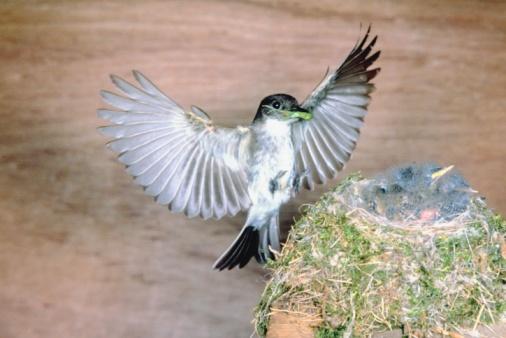 Spread Wings「Bird at nest with offspring」:スマホ壁紙(10)