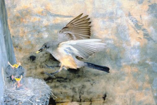 Spread Wings「Bird at nest with offspring」:スマホ壁紙(9)