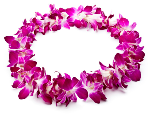 Floral Garland「Lei made of purple orchids on white background」:スマホ壁紙(18)