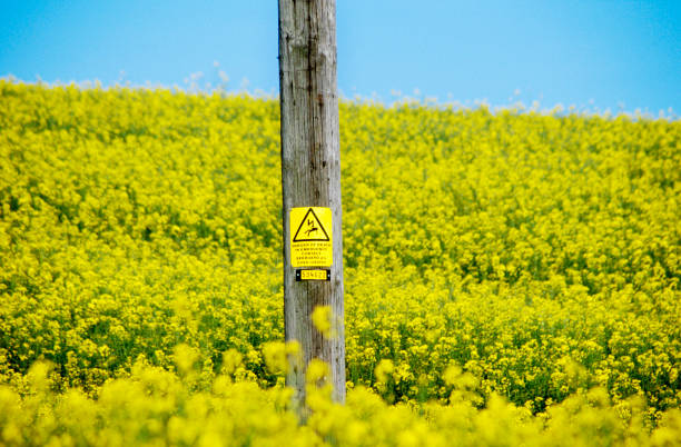 Field of Oilseed Rape with electricity warning sign on a wooden pole:ニュース(壁紙.com)