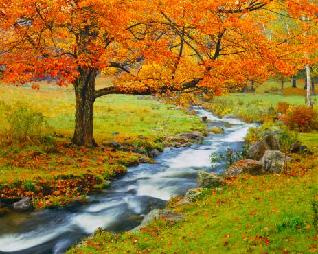 Sugar maple「Autumn In Vermont (g)」:スマホ壁紙(3)