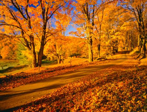 秋「バーモントの秋」:スマホ壁紙(17)
