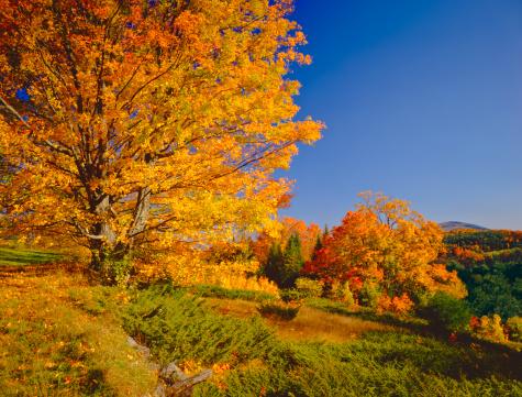 秋「バーモントの秋」:スマホ壁紙(14)