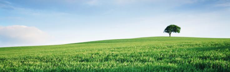 Single Tree「England, Yorkshire, single tree on hill overlooking wheat field」:スマホ壁紙(15)