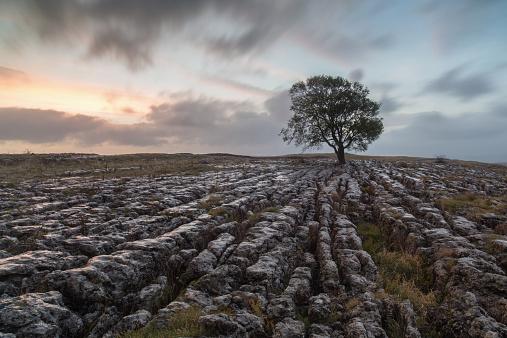 Ash Tree「UK, England, Yorkshire, Malham Ash at Sunrise」:スマホ壁紙(10)