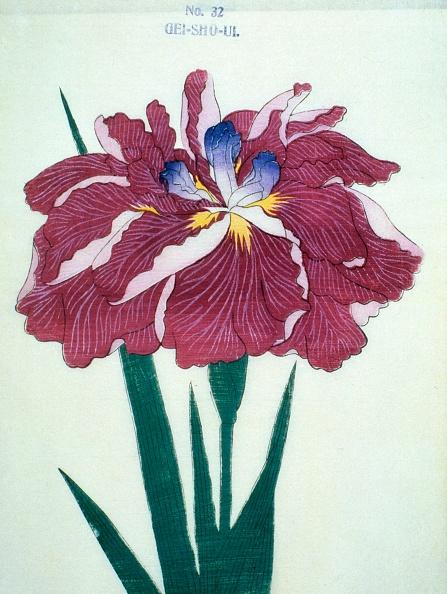 Perennial「Gei-Sho-Ui」:写真・画像(14)[壁紙.com]