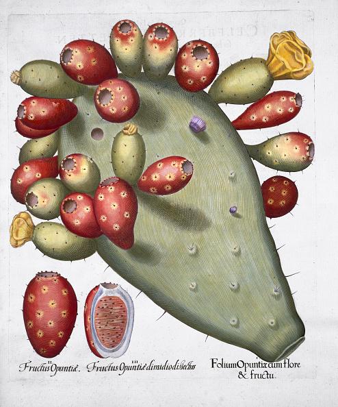 Basil「Folium Opuntia 1613」:写真・画像(12)[壁紙.com]