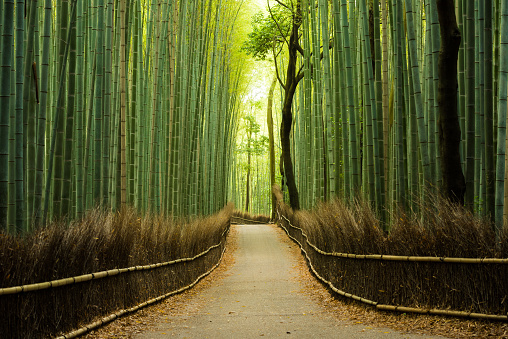 Kyoto City「Pristine natural bamboo forest」:スマホ壁紙(5)
