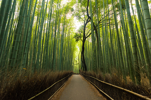 Spirituality「Pristine natural bamboo forest」:スマホ壁紙(8)