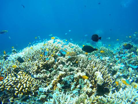 Focus On Background「Coral Garden」:スマホ壁紙(5)