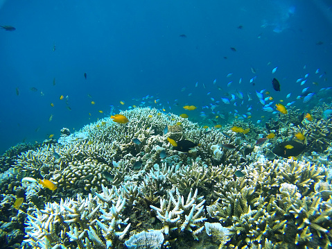サンゴ「コーラルの庭園」:スマホ壁紙(18)