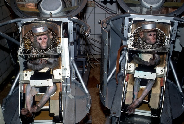 Scientific Exploration「Russian experiments on animals in space」:写真・画像(8)[壁紙.com]