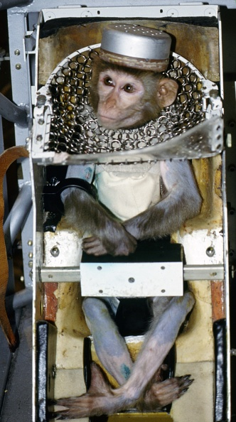 Primate「Russian experiments on animals in space」:写真・画像(8)[壁紙.com]