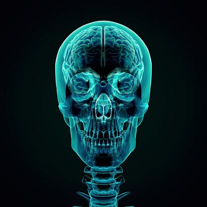 Cerebellum「Human Brain X-ray style」:スマホ壁紙(14)