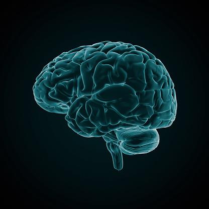 Cerebellum「Human Brain X-ray style」:スマホ壁紙(5)
