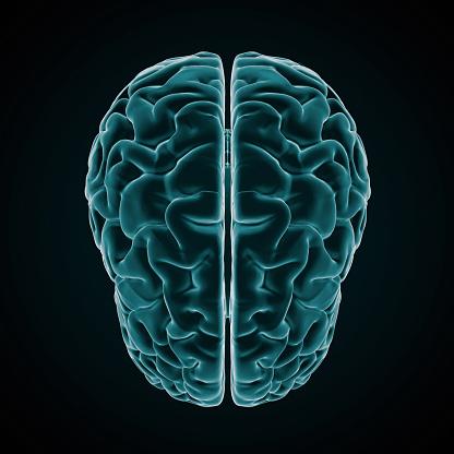 Cerebellum「Human Brain X-ray style」:スマホ壁紙(15)