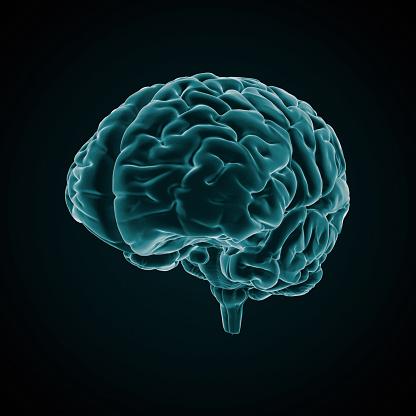 Cerebellum「Human Brain X-ray style」:スマホ壁紙(3)