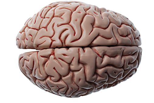 Brain「Human Brain (top view)」:スマホ壁紙(7)