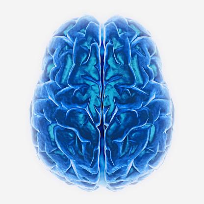 Cerebellum「Human Brain」:スマホ壁紙(12)