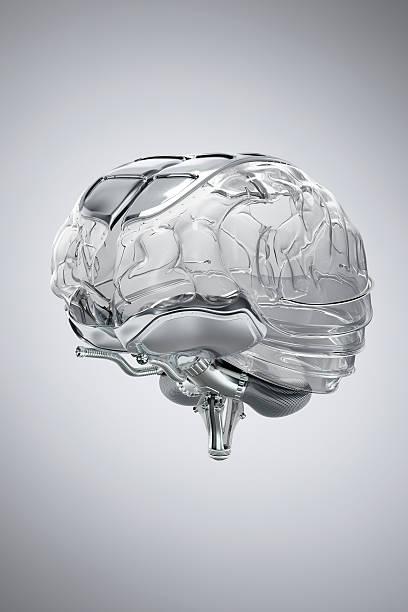 Human Brain model made of glass:スマホ壁紙(壁紙.com)