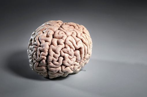 Healing「Human Brain」:スマホ壁紙(11)