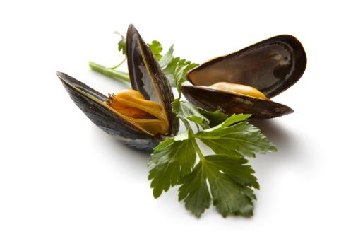 Mussel「Seafood: Mussels」:スマホ壁紙(8)