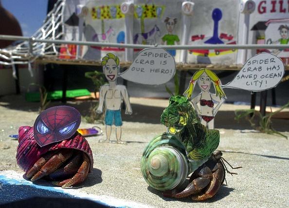 Land「Miss Crustacean Beauty Pageant」:写真・画像(6)[壁紙.com]