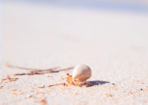北マリアナ諸島「Hermit Crab」:スマホ壁紙(1)