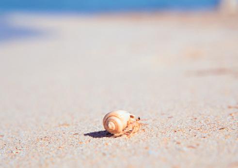 Northern Mariana Islands「Hermit Crab」:スマホ壁紙(6)