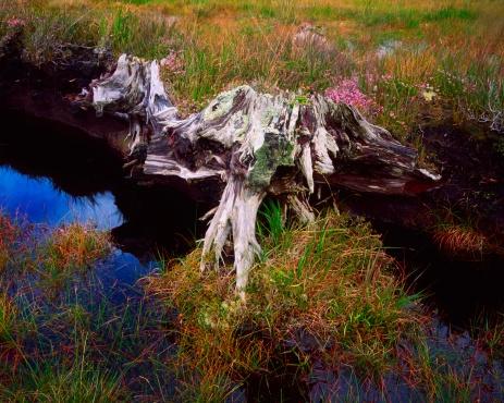 アキル島「Co Mayo, Achill Island, Bog Wood, Ireland」:スマホ壁紙(11)