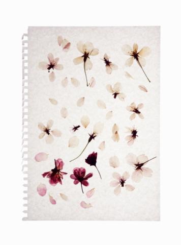 Cherry Blossoms「Pressed flower of cherry blossom on paper」:スマホ壁紙(3)