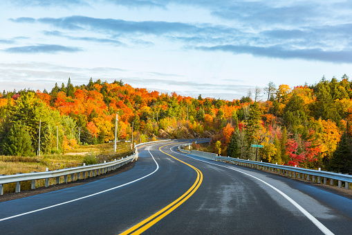 紅葉「Canada, Ontario, main road through colorful trees in the Algonquin park area」:スマホ壁紙(14)