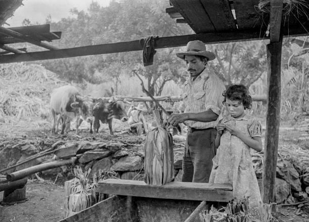 Sugar Mill, Guatemala, 1983:ニュース(壁紙.com)
