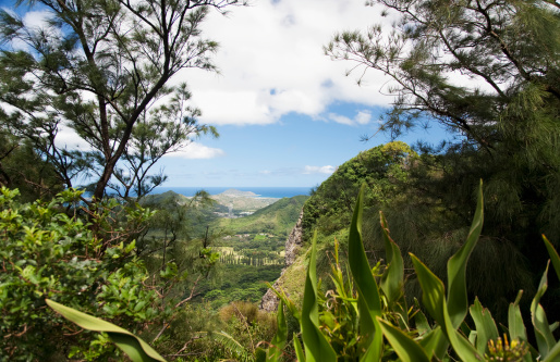 オアフ島「Viewpoint Near Nuuanu Pali Lookout Windward Coast In Distance」:スマホ壁紙(0)