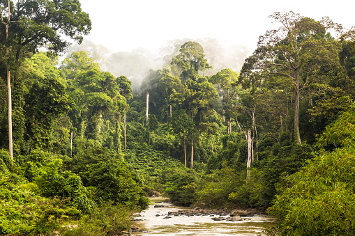 Fog「Mist and river through tropical rainforest, Sabah」:スマホ壁紙(19)